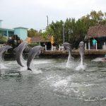 Dolphin Field Trip